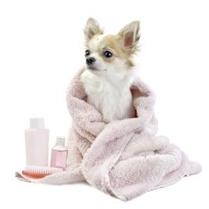 Куче след баня