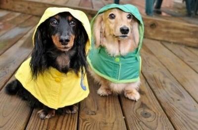Дъждурковци