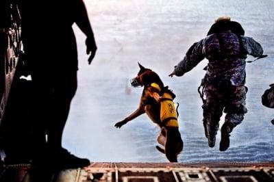 Кучета в подводна мисия