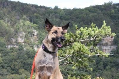 Кучето Джуно спасява живота на Лукас
