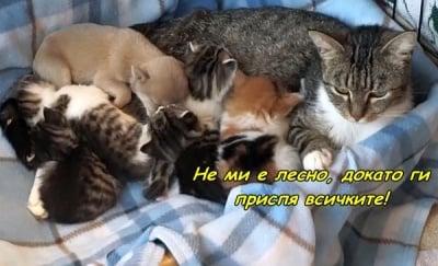 """""""Мама ни приспива"""""""