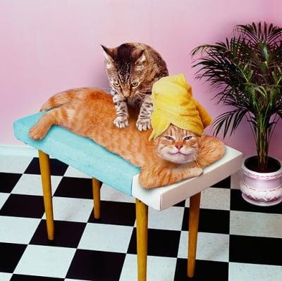 """Защо котките обичат да ни """"мачкат""""?"""