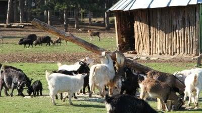 Местят животните от пловдивския зоопарк
