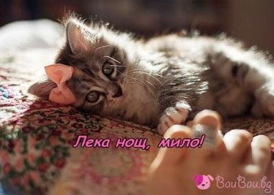 Мило мое котенце!