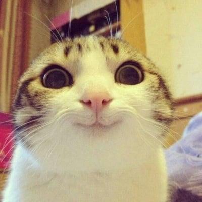 Миловидна котка
