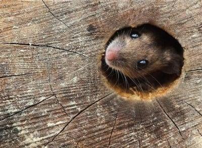 Мишка в дупка