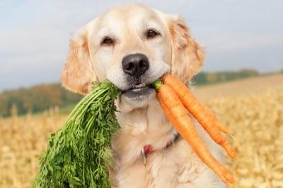 Може ли кучето да яде моркови