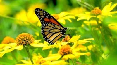 Красотата на една пеперуда