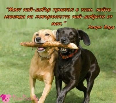Най - добрите приятели