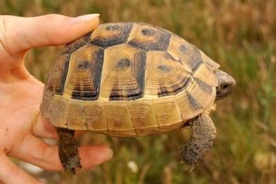 НЕ спасявайте костенурки от дивата природа, призовават природозащитници