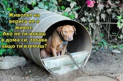 Не вземайте животно, ако не го обичате!