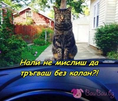 На вниманието на всички шофьори!