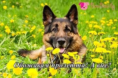 Любител на пролетта