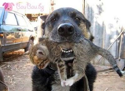 Някой да е поръчвал котенце?