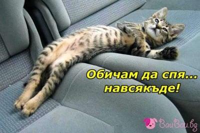 """""""Обичам да спя... навсякъде!"""""""