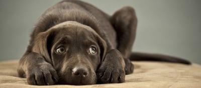 От какво се страхуват кучетата