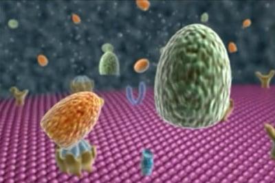 Обща патогенеза на болестите