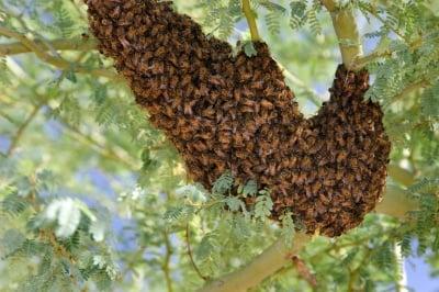 Пчели убиха човек