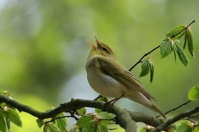 Пеенето на птиците ни лекува