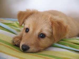 Перитонит при кучето