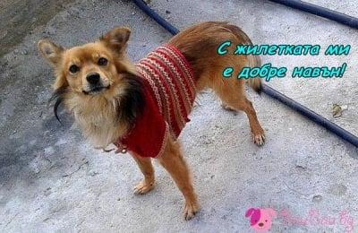 Плетивото му отива :)