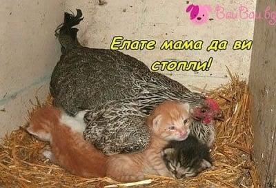 Под майчино крило