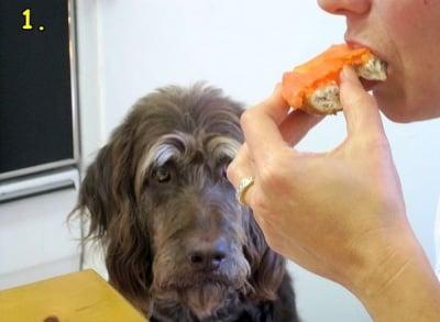 Погледа на кучето по време на вечеря