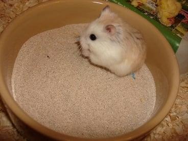 Пясъчна баня хамстер