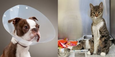 Предпазна яка за животни след операция