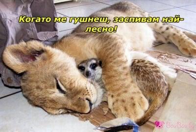 Гушнат се спи най - добре!