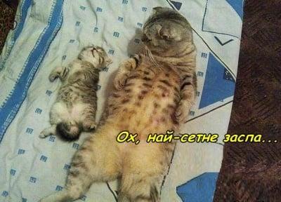 Приспиване