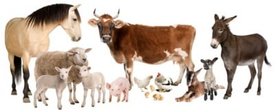 Влизат в сила промените в Наредба 26 за директните фермерски продажби