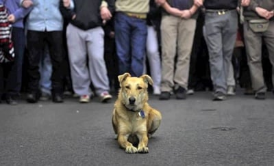Протест срещу скандалните промени в Закона за защита на животните