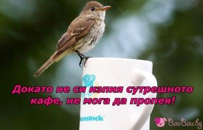 Птича песен за добро утро