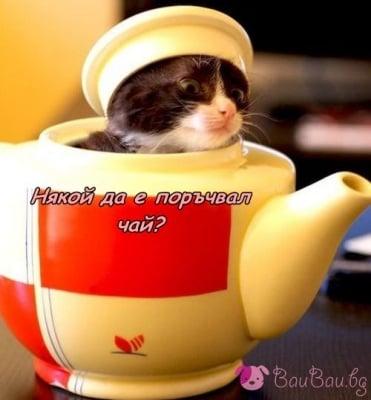 """""""Я! Чаят е готов!"""""""