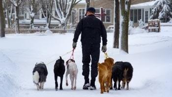 Разхождане на кучето през зимата