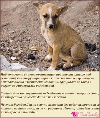 1 август - Универсален Рожден Ден на всички животни без подслон