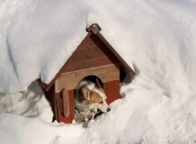 Съвети за кучешката къща