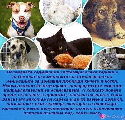 Седмица за осиновяване на нежеланите животни