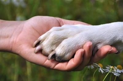 Добри хора от Казанлък се грижат за пострадали животни