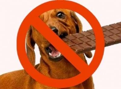 Шоколада е отровен за кучето
