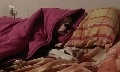 ...и детето вече спи...