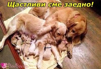 Едно голямо щастливо семейство