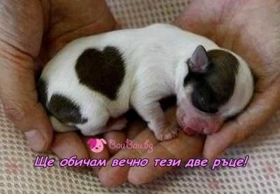 Безрезервна любов