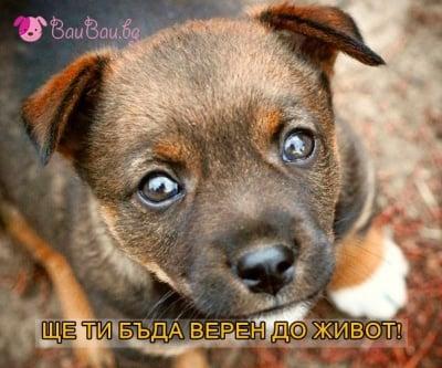 Верността на кучето
