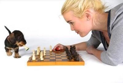 """""""И-и-и-и шах и мат"""""""