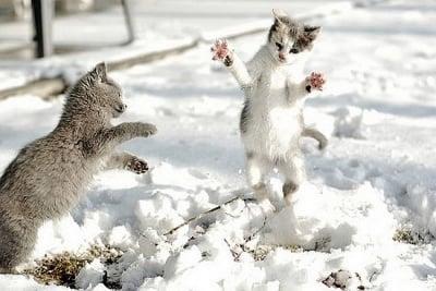 Снежна котешка игра