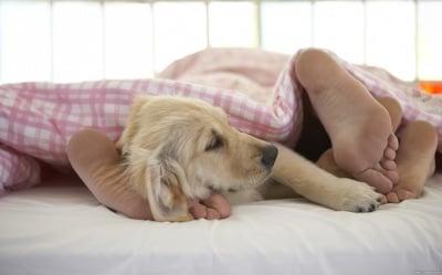 Спане с кучето