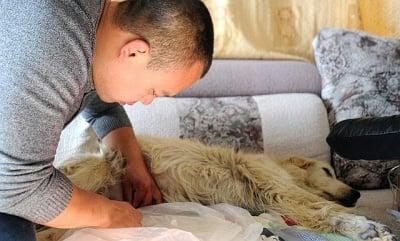 Спасяване на куче