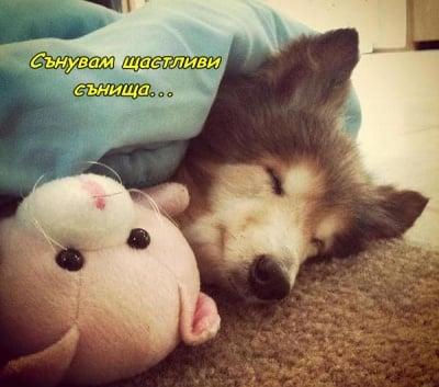 Щастлив на сън